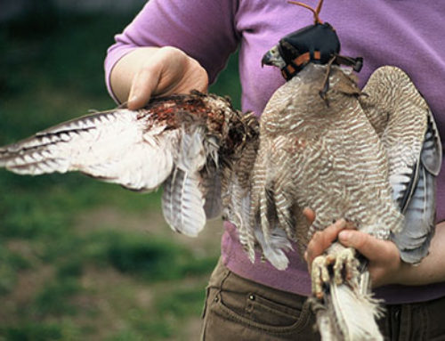 Injured bird